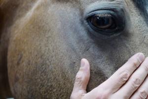 Le Caravage de Alain Cavalier cheval