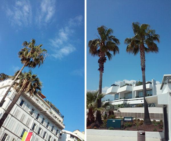 Palmier ciel bleu à Cannes pendant le festival croisette