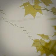 Interview SMS de Lolita Chammah : feuilles, automne © Annick Holtz.