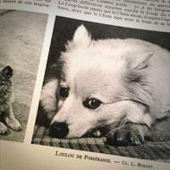 Interview SMS de Lolita Chammah : chien © Annick Holtz.