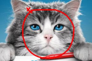 Le stagiaire des affiches - Ma vie de chat